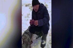 Thợ săn ăn sống tim sói để trả thù gây tranh cãi ở Kazakhstan