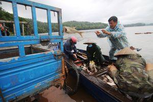 Lãi to khi bắt được hàng tấn cá mè khi hồ Phú Ninh xả nước sau mưa lịch sử