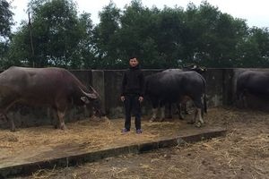 Hà Tĩnh: Dùng xe tải đến trang trại anh trai trộm 8 con trâu đem bán