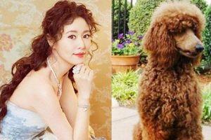 Lâm Tâm Như tự so sánh mái tóc 'xù mì' của mình giống hệt chú chó yêu thích