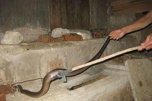 Muốn rắn không bao giờ bén mảng nhà bạn, hãy thử những cách này