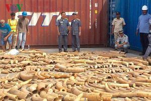Lực lượng hải quan Campuchia thu giữ hơn 3 tấn ngà voi