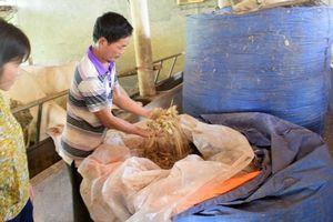 Nghệ An: Chuẩn bị chuồng trại, 'lương khô' phòng rét đậm cho bò