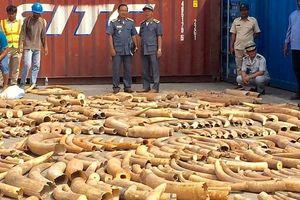 Tịch thu hơn 3 tấn ngà voi trong vụ buôn lậu lớn nhất Campuchia