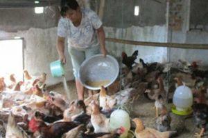 Quảng Nam: Quế Hiệp giúp dân làm giàu, được dân ủng hộ