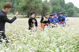 Không cần phải đi xa, ngay Hà Nội cũng có hoa Tam giác mạch đẹp nao lòng để thỏa sức check in