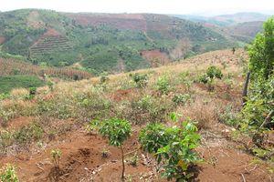 Đất rừng giao sai đối tượng vẫn chưa thể thu hồi