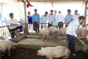 Chăn nuôi Thừa Thiên - Huế tăng trưởng mạnh