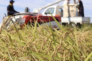 Đặt cược vào gạo organic