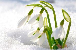 Tử vi tuần mới (17/12 - 23/12): Tuổi Tuất giàu có, tuổi Hợi tài chính khá