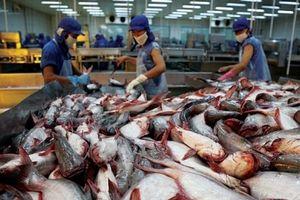 Trung Quốc là thị trường tiêu thụ cá tra tiềm năng của Việt Nam