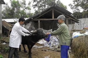 Quyết liệt trong công tác phòng, chống dịch bệnh gia súc, gia cầm vụ Đông Xuân