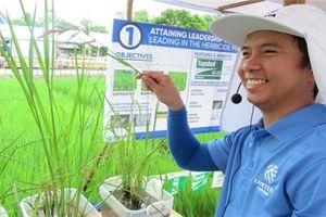 Corteva giới thiệu mô hình canh tác lúa lai mới tại Thái Bình