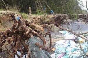 Sạt lở nghiêm trọng tại bờ biển Vinh Hải