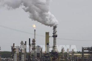 Giá dầu thế giới quay đầu hồi phục