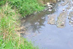 Đồng Nai: Các trại heo đe dọa nguồn nước