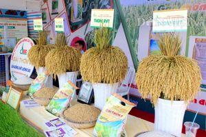 Việt Nam chính thức có logo thương hiệu gạo quốc gia