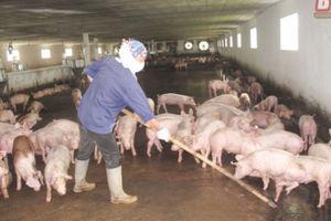 Thái Bình: Năm 2018, giá trị sản xuất nông, lâm, ngư nghiệp đều tăng