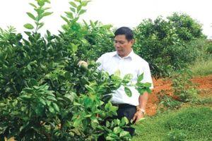 Huyện Cẩm Khê (Phú Thọ): Hình thành các vùng sản xuất tập trung