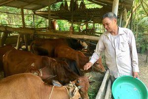 Hiệu quả chương trình hỗ trợ sản xuất ở Lục Yên