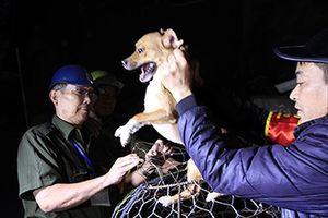 Gắn chíp quản lý chó nuôi tại Hà Nội?