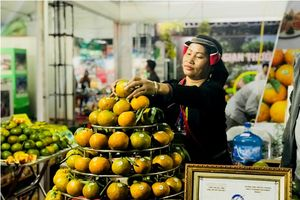 Cơ hội để cam Hà Giang, quýt Bắc Kạn mở rộng thị trường