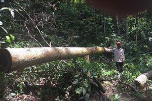 Công an Bình Phước điều tra dấu hiệu phá hàng chục héc-ta rừng