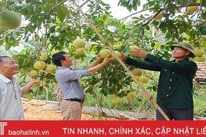 CCB Hương Sơn có 245 mô hình kinh tế thu nhập hơn 100 triệu đồng