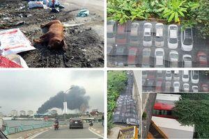Tin tức Hà Nội 24h: Xác lợn chết ngổn ngang từ dịch lở mồm long móng