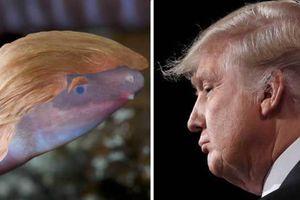 Động vật lưỡng cư mang tên Donald Trump