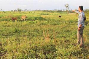 Gia Lai: Phát hiện nhiều sai phạm tại BQL rừng Ayun Pa