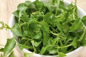 Mùa này, rau cải xoong nhúng lẩu thì ngon phải biết nhưng có ai biết những lợi ích cực lớn của loại rau không hề đắt này?