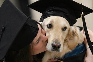 Hy hữu: Lần đầu tiên có chú chó được ĐH Mỹ trao bằng danh dự chỉ vì lý do này…