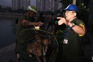 Đề xuất gắn chip định vị quản lý chó nuôi