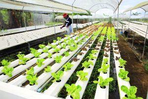 Ứng dụng nông nghiệp công nghệ cao vùng ĐBSCL: Nút cổ chai và bình thông nhau