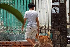 Đà Nẵng: Chủ nuôi chó, mèo có nhiệm vụ đăng ký với UBND các phường