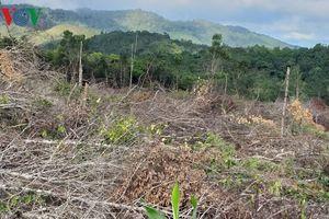 Gia Lai chỉ đạo xử lý vụ doanh nghiệp thuê người phá rừng ở Krông Pa