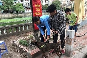 Chủ nuôi phải bồi thường thiệt hại nếu để chó, mèo tấn công người khác