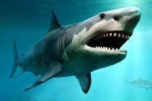 Xác định thủ phạm làm tuyệt chủng động vật lớn ở biển