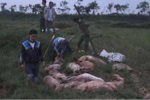 Liên tiếp bắt giữ xe ô tô chở lợn bị lở mồm long móng