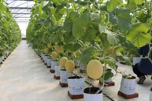 VNPT đưa giải pháp IoT ứng dụng thành công vào Nông nghiệp 4.0