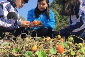 Lạng Sơn: Làm tương cà, học sinh vùng núi đá đạt giải sáng kiến