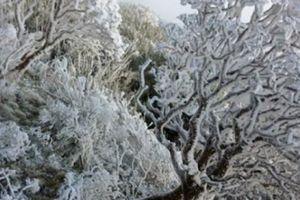 Miền Bắc đón Tết Dương lịch trong mưa rét dưới 10 độ C