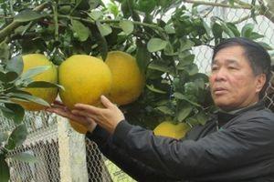 Nông thôn mới Đông Sang: Bản sạch đẹp, nương vườn xanh rau quả