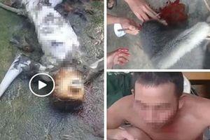 Cái kết cho nhóm người giết voọc ăn óc sống, phát video lên facebook