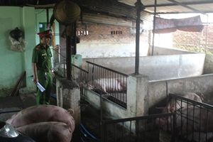 Tiêu hủy trên 2 tấn lợn lở mồm, long móng ở Đồng Nai