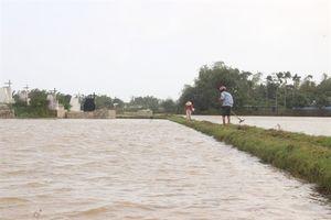 Bình Định: Mưa lũ tiếp tục gây hại nhiều diện tích lúa ĐX vừa gieo sạ lại