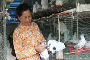 Kiên Giang: Nuôi loài chim ấp trứng giả, thu mỗi tháng 30 triệu đồng
