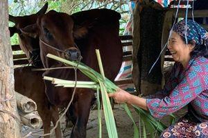 Hiệu quả từ những hỗ trợ xóa đói giảm nghèo của Viettel tại huyện Bá Thước