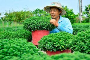 Nông dân Kiên Giang phập phồng lo vụ hoa Tết